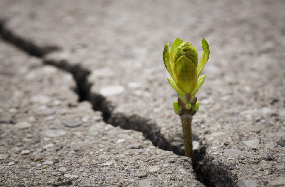 Junge Pflanze im Asphalt als Symbol für Resilienz